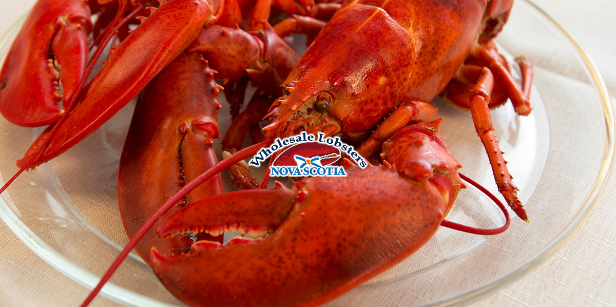 Wholesalel-Lobster-Nova-Scotia-2